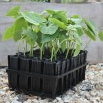 Kweektray Deep Roots - 32 cellen