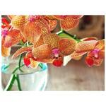 Substral meststofstaafjes orchideeën (10 stuks)