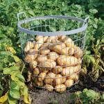 Metalen oogstkorf - aardappelmand