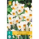 Narcissus Geranium - meerbloemige narcis (5 stuks)