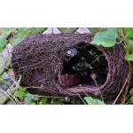 Nestbuidel roodborstje - naturel Simon King