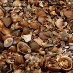 Noordzeeschelpen gewassen in big bag ca 0,7 m³