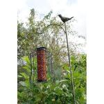 Pindavoedersilo kleine vogels (ZWART)