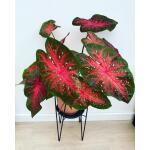 Plantenstandaard Blom zwart - 18 x 18 x 25 cm