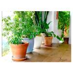 Substral potgrond kamerplanten en palmen 10 liter