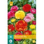 Ranunculus mix (10 stuks)
