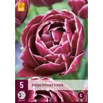 Tulipa Dream Touch - Tulp dubbellaat (5 stuks)