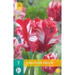 Tulipa Estella Rijnveld - parkiet tulp (7 stuks)