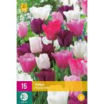 Tulipa Pastel mix - Triumph tulp