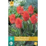 Tulipa Red Riding Hood - Greigii Tulp (10 stuks)