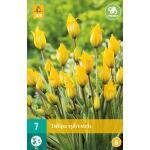 Tulipa sylvestris - botanische tulp (7 stuks)