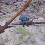 Vigne-fix 7 cm plantenbinder - 500 g