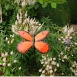 Vlinder oranje op krulpin