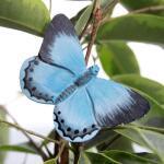 Vlindermagneet boomblauwtje